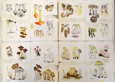 Lot-070c-16-watercolours-per-sheet