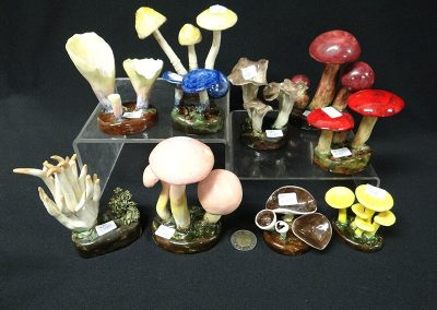 Misc-Lorenzen-Mushrooms-1