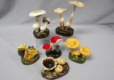 Misc Lorenzen Mushrooms